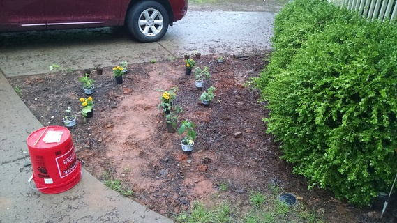 Garden bed with plants laid out
