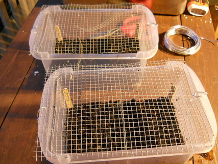Wire mesh on top of seed-starting container